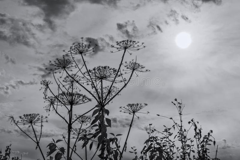 Planta de guarda-chuva contra o céu e o sol foto de stock royalty free