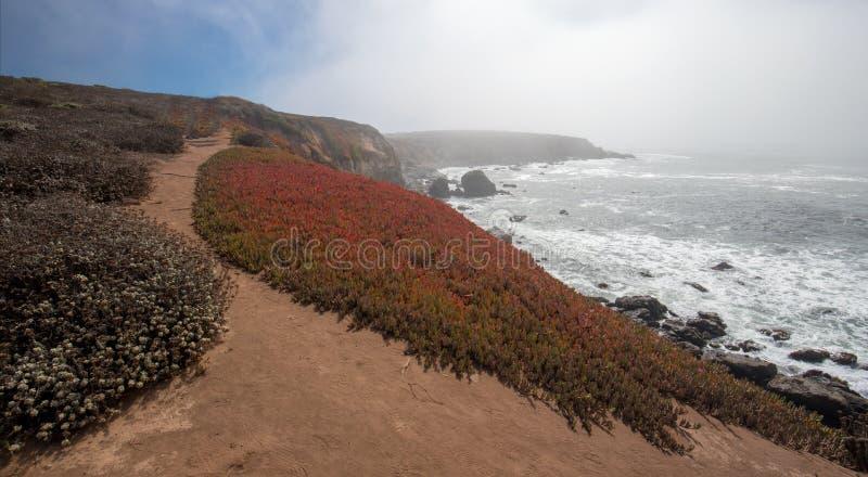 Planta de hielo en rastro del peñasco en la costa costa central rugosa de California en Cambria California los E.E.U.U. imágenes de archivo libres de regalías