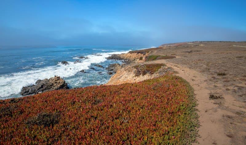 Planta de hielo en rastro del peñasco en la costa costa central rugosa de California en Cambria California los E.E.U.U. fotos de archivo libres de regalías