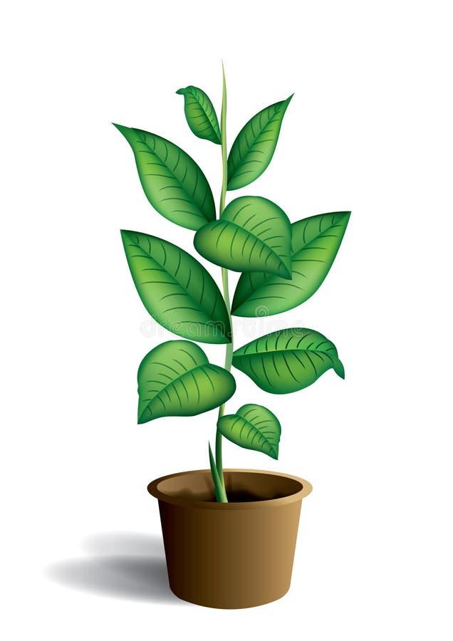 Planta de interior stock de ilustración