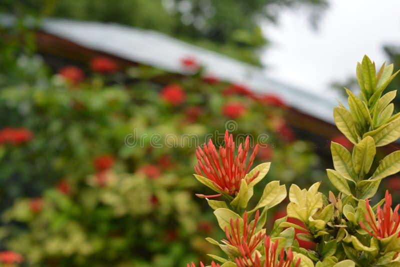 Planta de jardim focalizada fotografia de stock royalty free