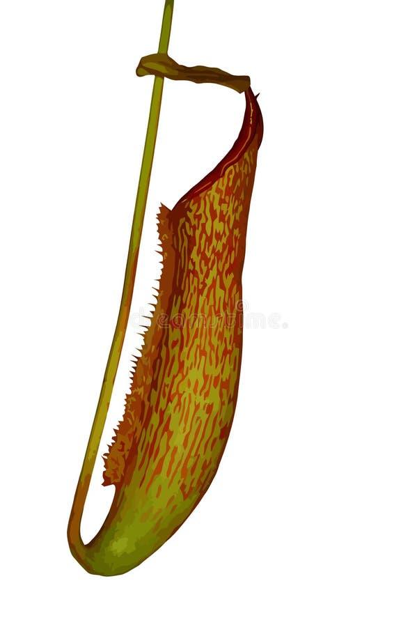 Planta de jarra ilustración del vector