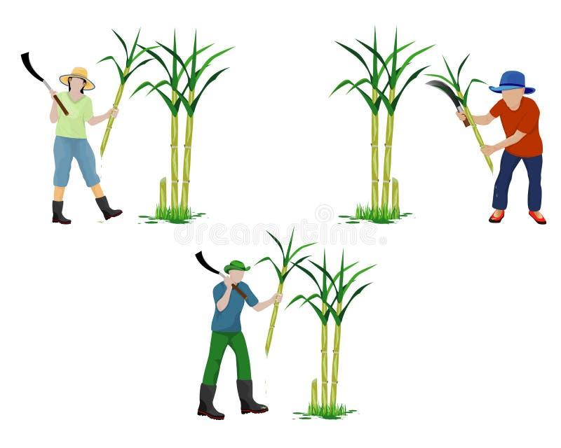 Planta de la caña de azúcar de la cosecha de la forma de la historieta del agrónomo libre illustration