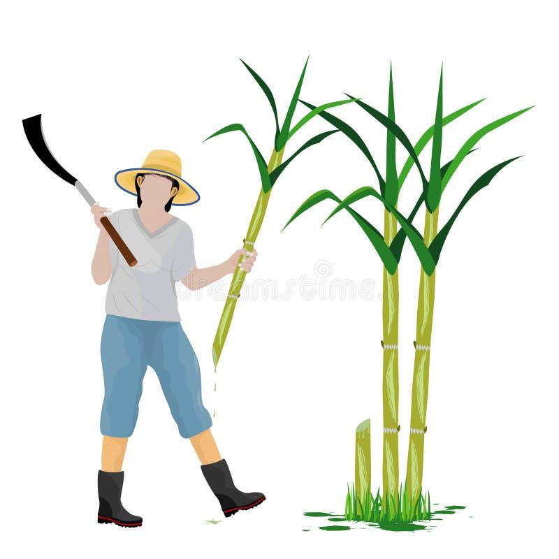 Planta de la caña de azúcar de la cosecha de la forma de la historieta del agrónomo stock de ilustración