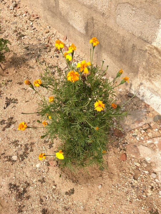 Planta de la flor imagen de archivo