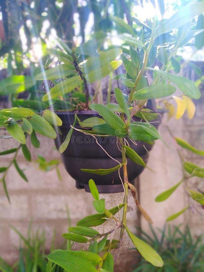 Planta de la flor de la planta de tiesto fotos de archivo