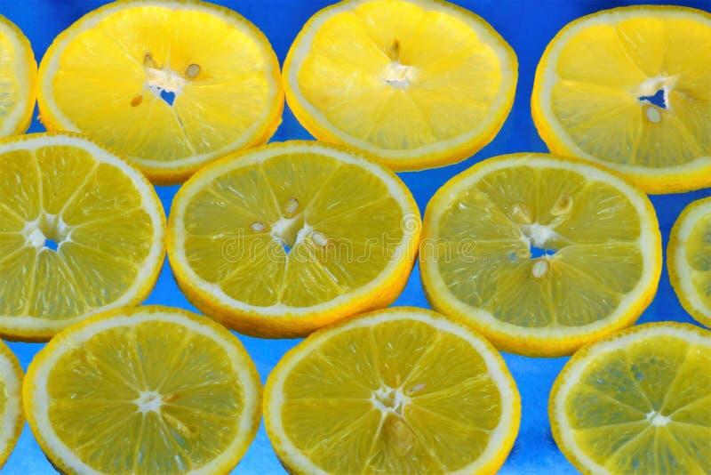 Planta de la fruta cítrica del limón Cultivado en muchos países con clima subtropical Las frutas del limón tienen propiedades úti imagen de archivo