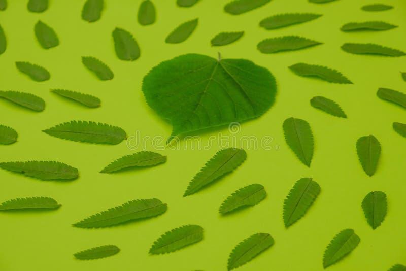 Planta de la hoja del concepto de la naturaleza del fondo de la primavera, endecha creativa ilustración del vector