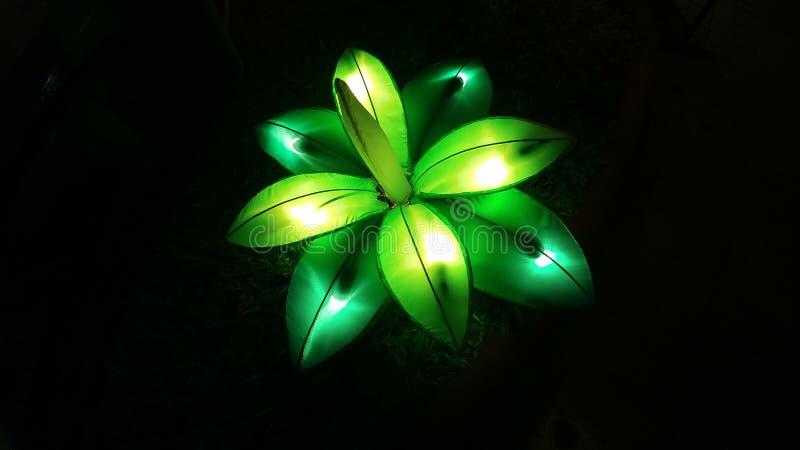 Planta de la luz verde imagen de archivo libre de regalías