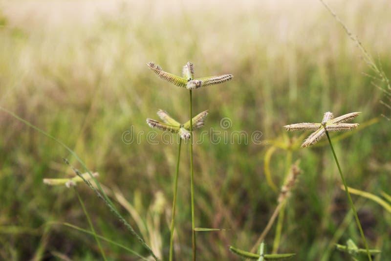 Planta de la mala hierba fotos de archivo libres de regalías