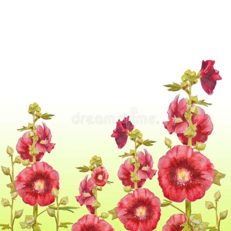 Planta de la malva aislada en el fondo blanco Ejemplo botánico para su invitación ilustración del vector
