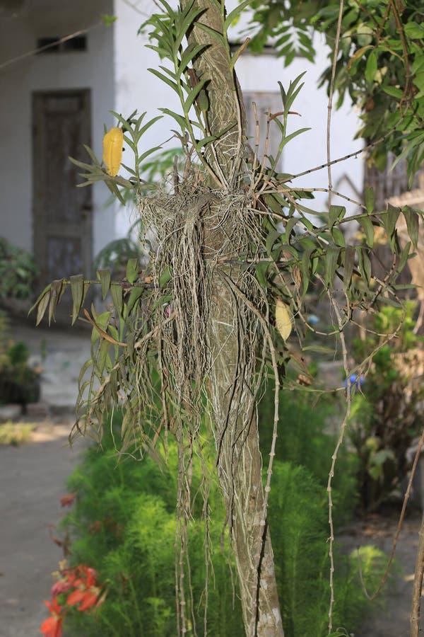 Planta de la orquídea imágenes de archivo libres de regalías