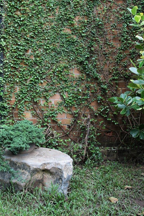 Planta de la pared de ladrillo y de la hiedra imagenes de archivo