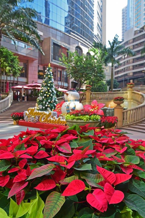 Planta de la poinsetia en la plaza magnífica Hong Kong del milenio fotos de archivo