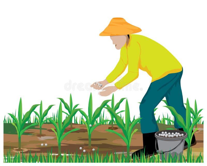 Planta de maíz del abono del agrónomo pequeña ilustración del vector