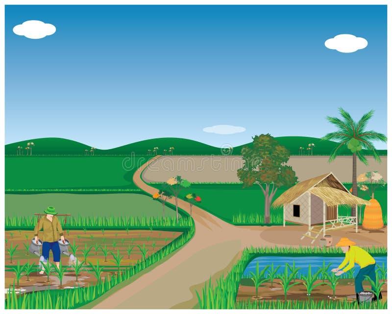 Planta de maíz del abono del agrónomo pequeña stock de ilustración