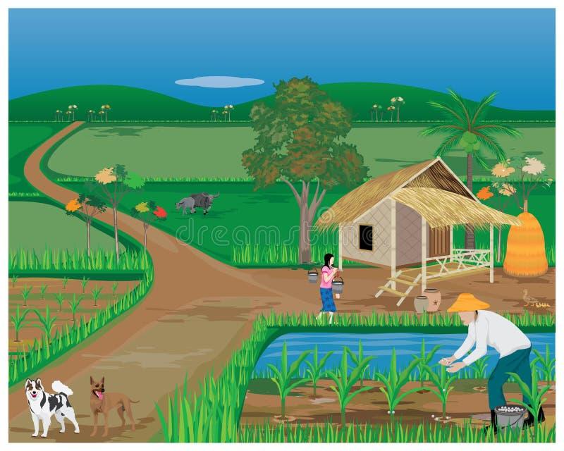 Planta de maíz del abono del agrónomo pequeña libre illustration