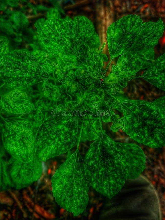 Planta de néon fotografia de stock royalty free