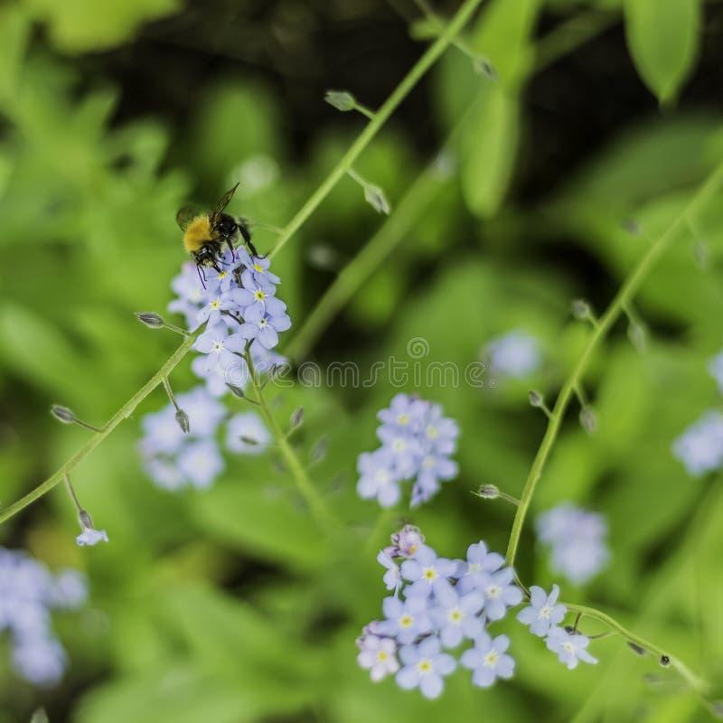 Planta de Nectar From A de la alimentación apícola en Sunny Day imagen de archivo libre de regalías