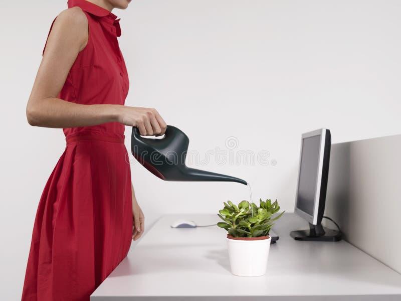 Planta de riego femenina del escritorio del oficinista imagen de archivo