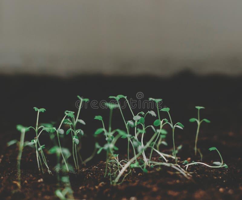 Planta de semilla verde imagen de archivo