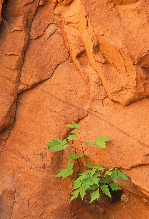 Planta de semillero y pared de la roca fotografía de archivo