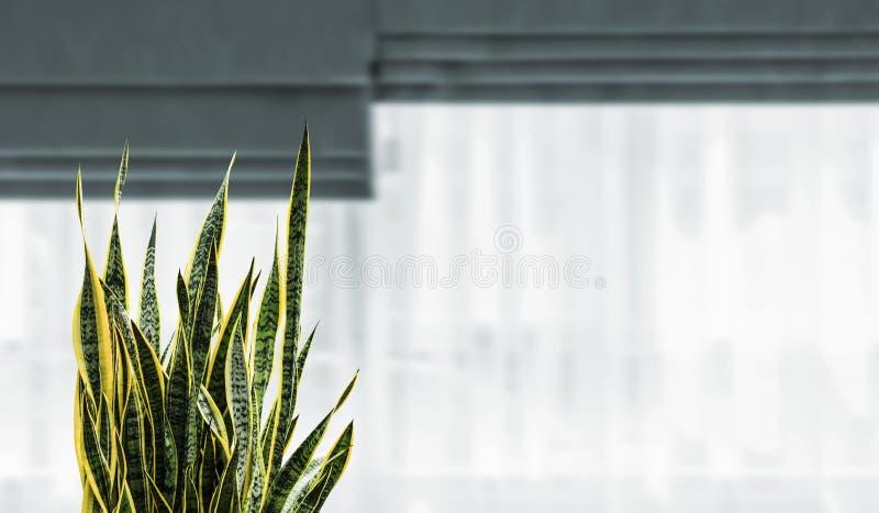 Planta de serpente na janela no quarto imagem de stock royalty free