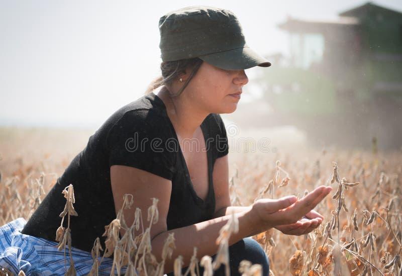 Planta de soja examing de la muchacha joven del granjero durante cosecha fotos de archivo
