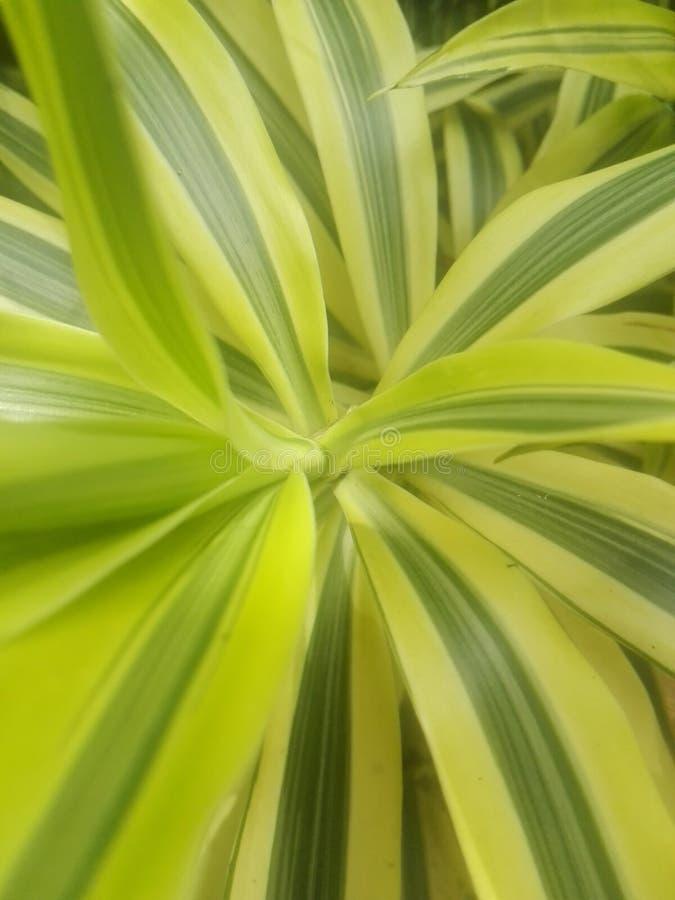 Planta de Swirly com fascinar a cor amarela fotografia de stock royalty free