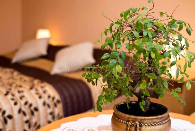 Planta de tiesto en un dormitorio foto de archivo libre de regalías