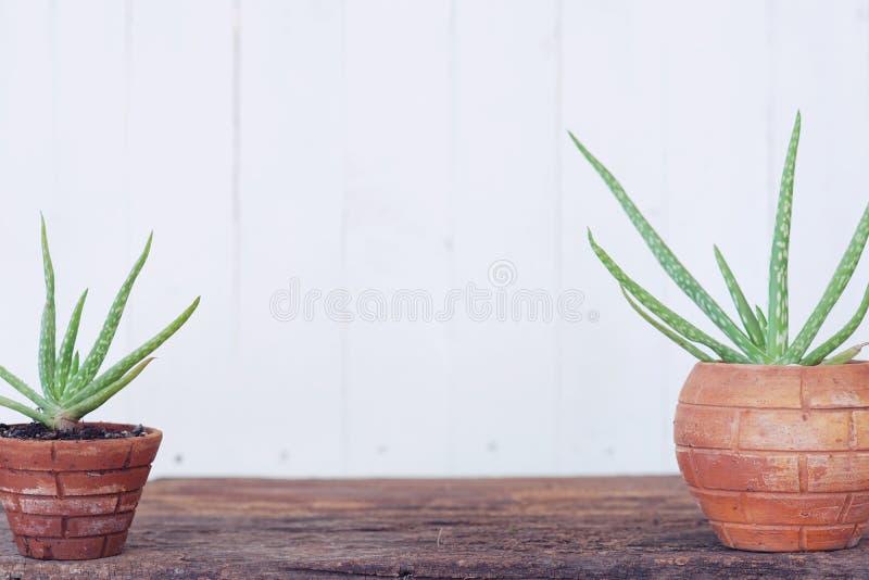 Planta de tiesto de Vera del áloe en la tabla de madera con el fondo de madera blanco de la pared imágenes de archivo libres de regalías