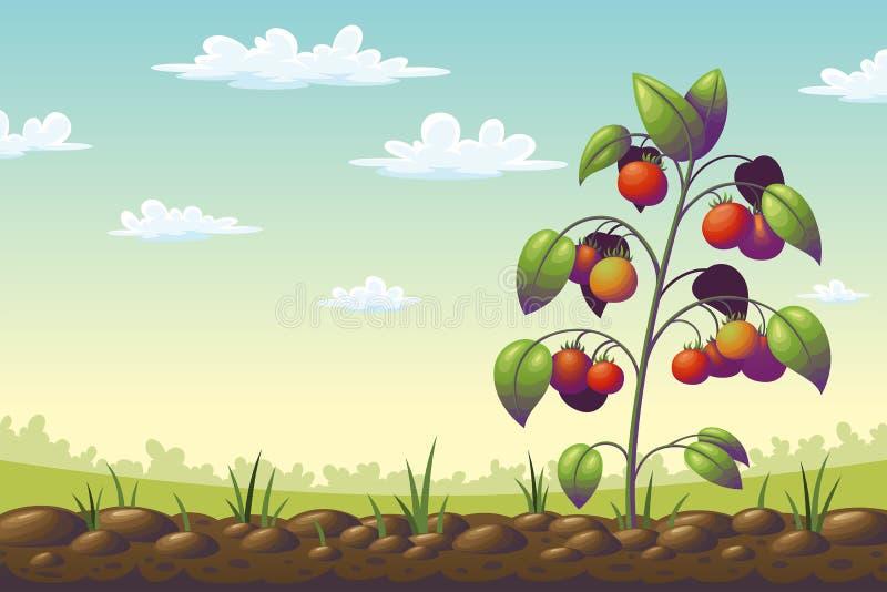 Planta de tomate en un campo libre illustration