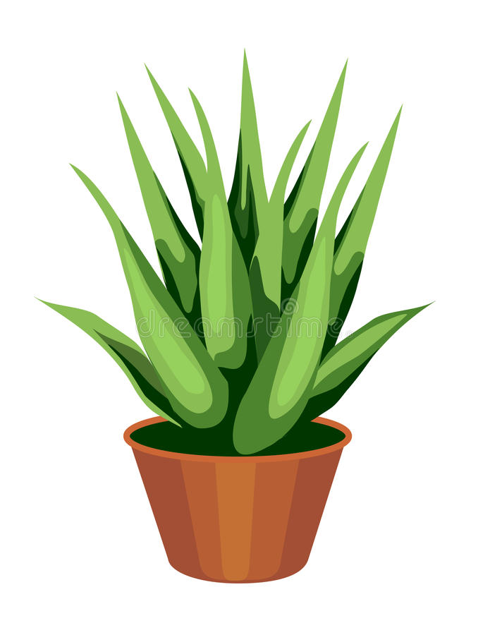 Planta de Vera del áloe ilustración del vector