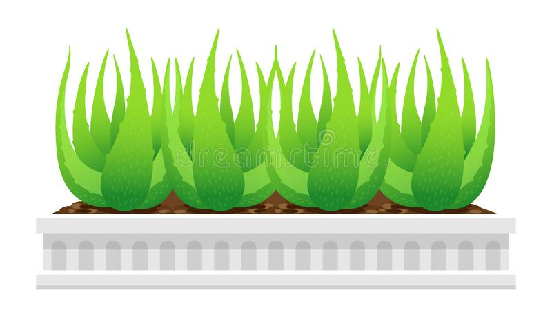 Planta de Vera del áloe en el pote blanco aislado en el fondo blanco, clip art de las hojas de Vera del áloe, áloe Vera para l stock de ilustración