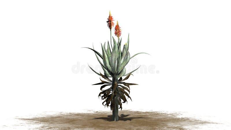 Planta de Vera do aloés em uma área da areia ilustração do vetor