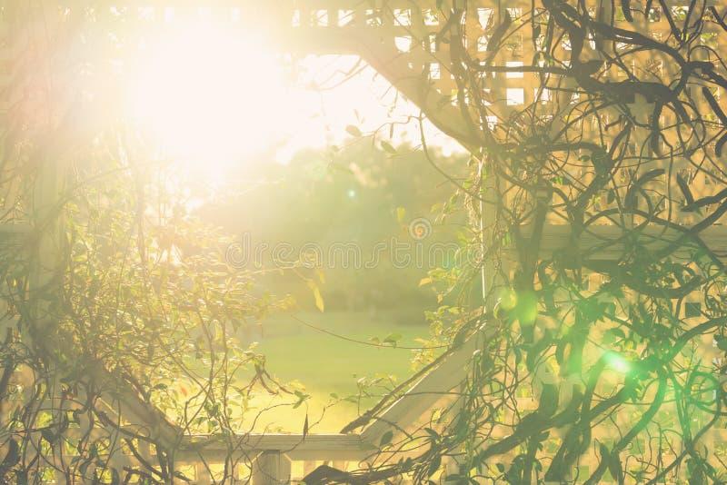 Planta de vid que crece en el enrejado fotos de archivo