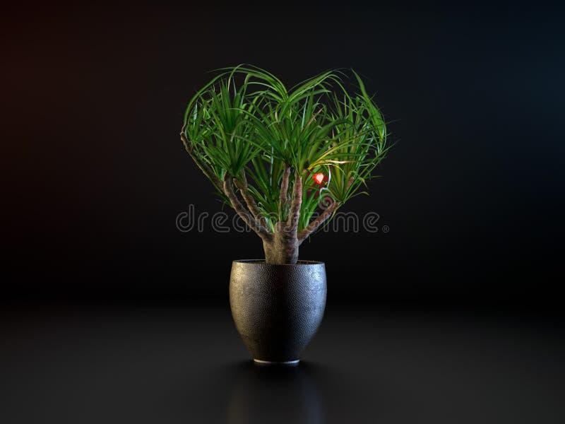 Planta decorativa da casa na forma do coração fotografia de stock