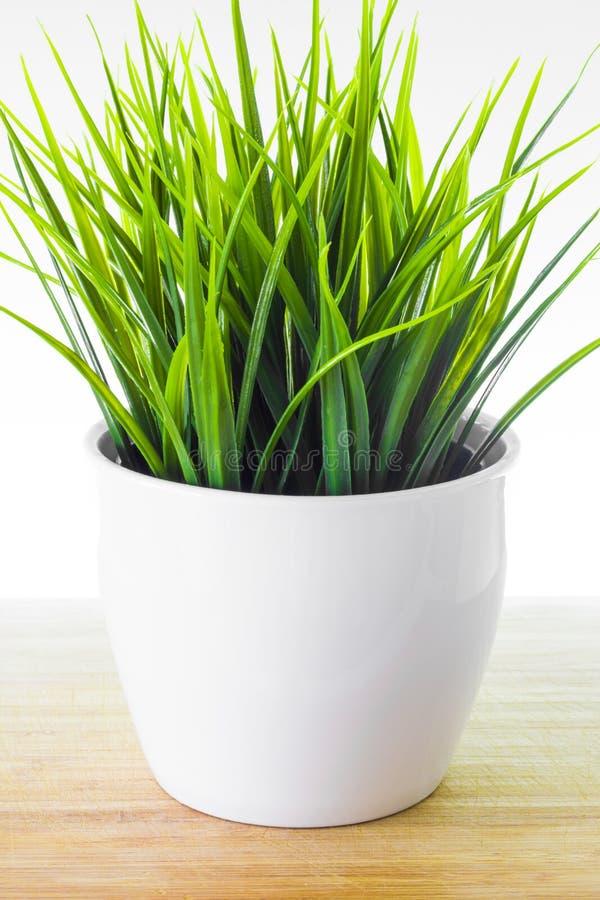 Planta decorativa de los wheatgrass en la maceta blanca foto de archivo libre de regalías