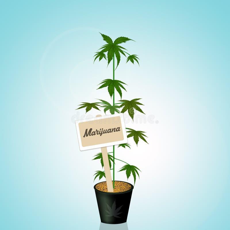 Planta del cáñamo de la marijuana ilustración del vector