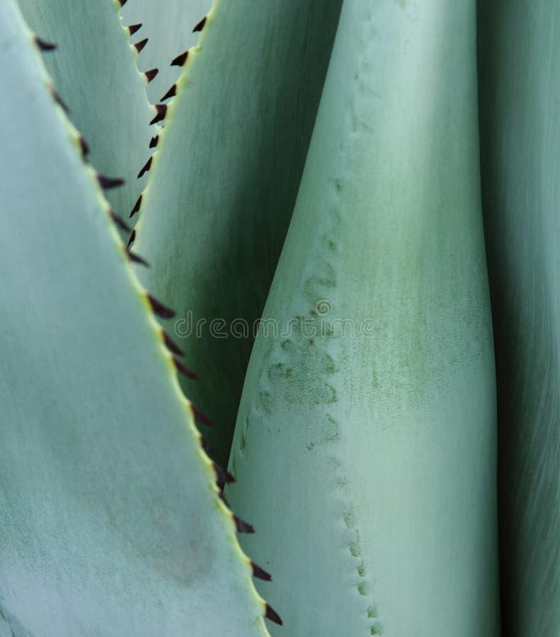 Planta del cactus imagenes de archivo