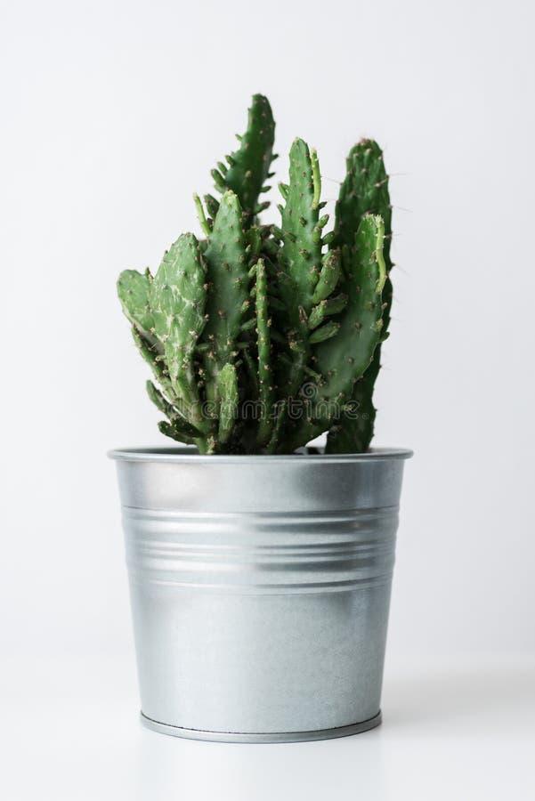 Planta del cactus en un cierre del pote del metal para arriba Decoración moderna del sitio Planta de la casa del cactus fotografía de archivo libre de regalías