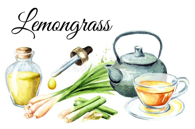 Planta del Cymbopogon, té y tarjeta frescos del aceite esencial Ejemplo dibujado mano de la acuarela aislado en el fondo blanco ilustración del vector