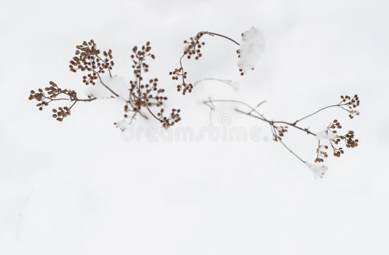 Planta del invierno con los copos de nieve imagen de archivo