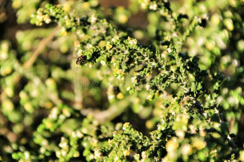 Planta del kali del Salsola debajo del sol en otoño fotos de archivo