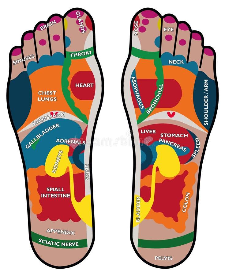 Planta del pie del Reflexology stock de ilustración