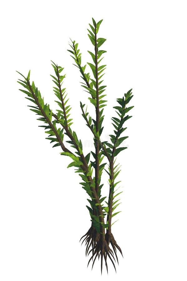 Planta del SP de Dicroidium ilustración del vector