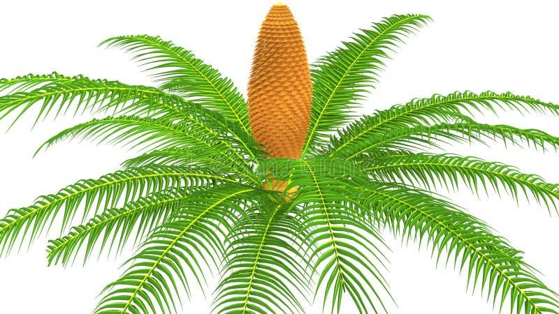 Planta del varón del Cycas stock de ilustración