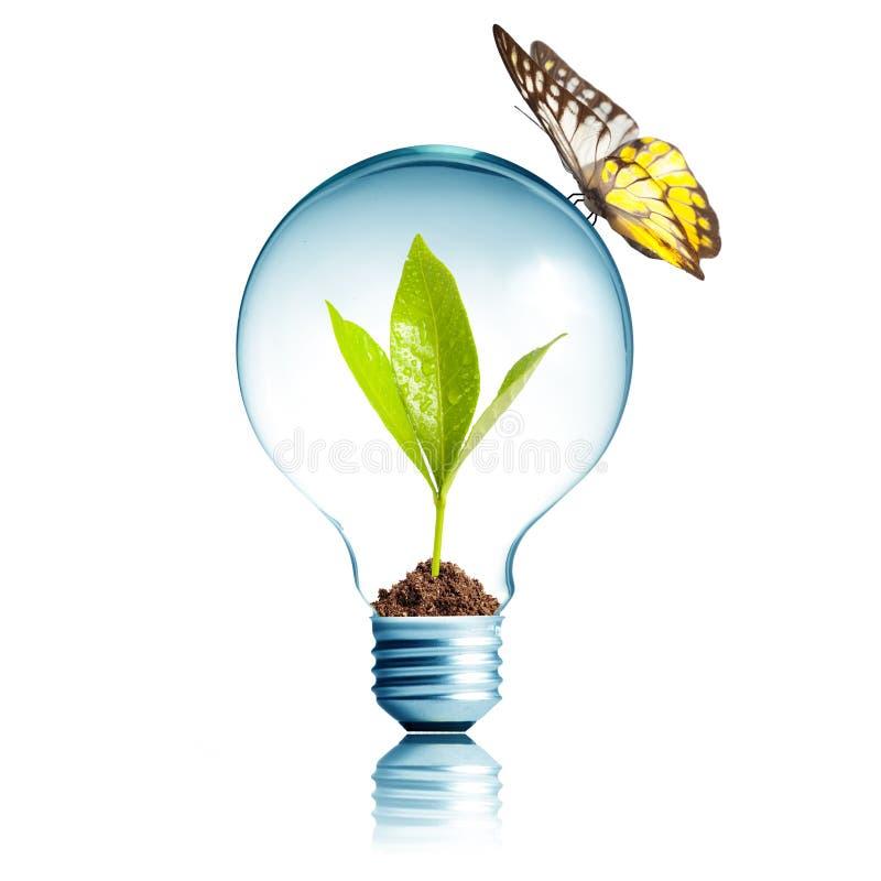 Planta dentro de la bombilla con la mariposa libre illustration