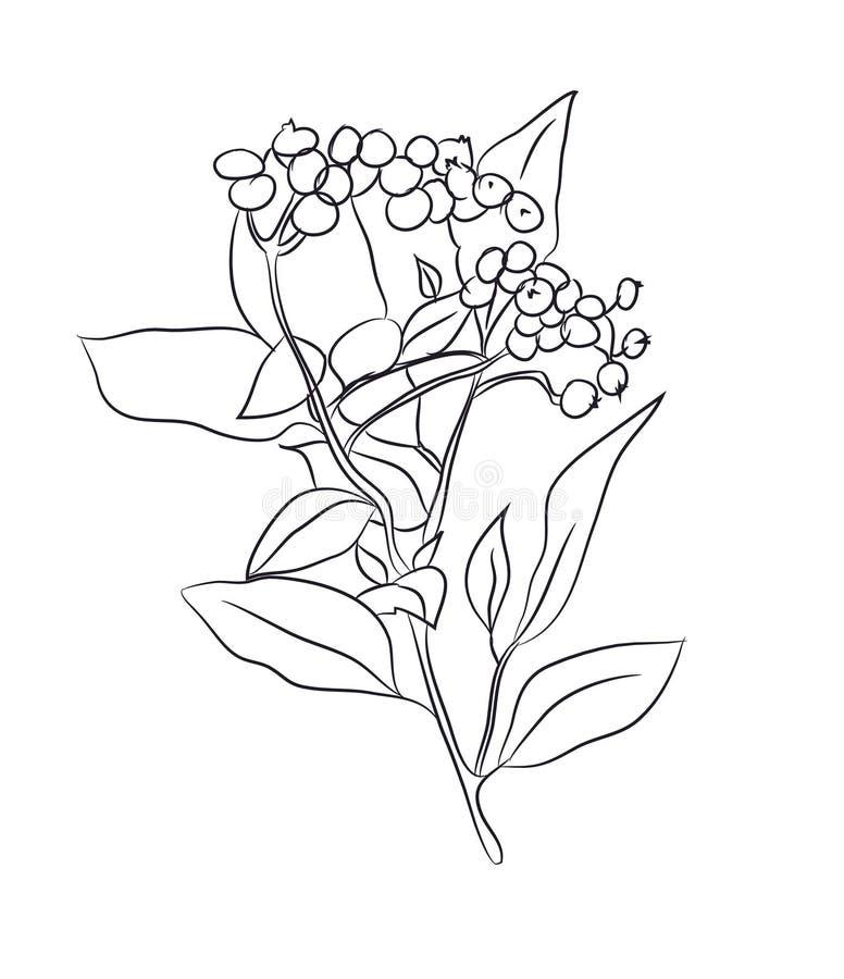 Planta dibujada en líneas, vector libre illustration