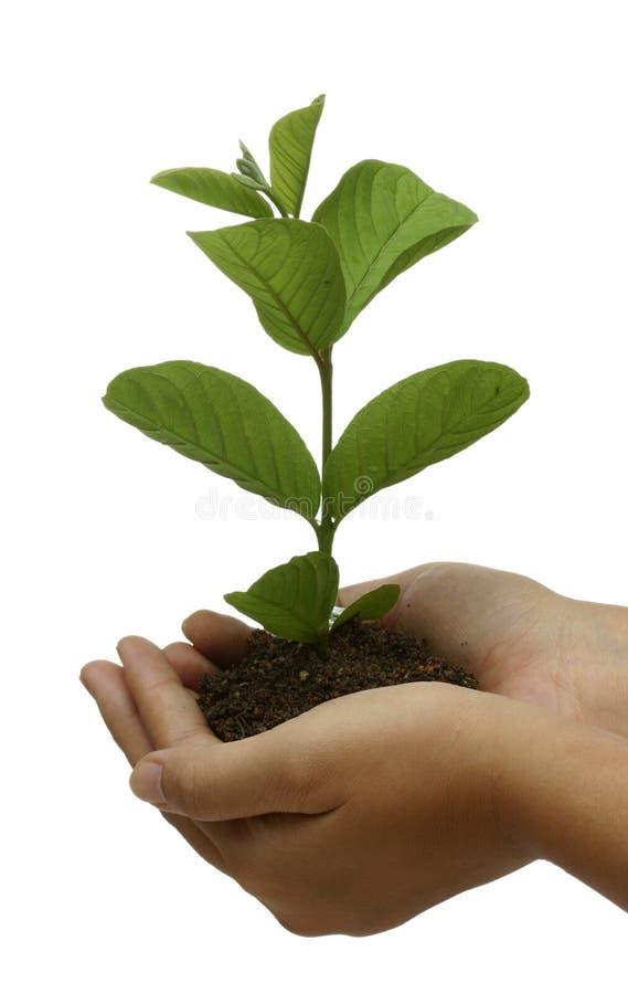 Planta disponível fotografia de stock royalty free